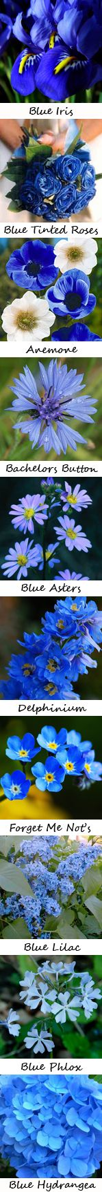 A guide to blue wedding flowers!  Best  guide ever!