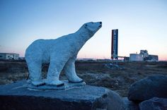 For Polar Bears, a Climate Change Twist - NYTimes.com