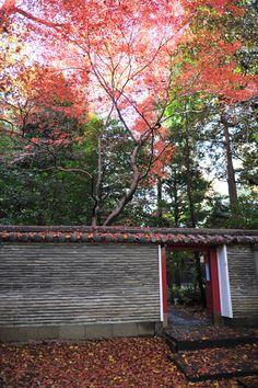 赤坂氷川神社 赤坂氷川神社は東京都10社のうちの一つでもある港区赤坂にある神社である。その歴史は江戸時代に遡り、8代将軍徳川吉宗によって現在の社殿が建てられた。  境内には天然記念物にも指定されている素晴らしい大イチョウの木がある。晩秋の光をあびて黄金に輝いて見える樹齢400年ほどを超えるとても美しいイチョウの木である。縁結びの神である夫婦神なども祀られているので、カップルで参拝し、そのご利益にあやかるも良いだろう。他には大黒様もある。  【赤坂氷川神社】 住所  :東京都港区赤坂6丁目10-12 最寄り駅:東京メトロ千代田線「赤坂」 参拝時間:6時~17:時 定休日 :なし #Tokyo #赤坂 #神社 #Nature