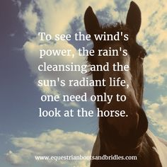 To see the wind's power, look at the horse quote