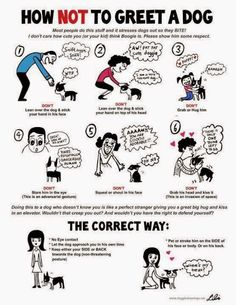 Greeting a dog : dos and don'ts