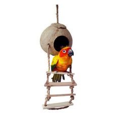 Pet Birds Parrot Parakeet Swing Natural Coconut Shell Nest Ladder Toy Cage Toys by birdcorner43