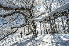 Nádherné fotky výhľadov z hôr z celého Slovenska – Sóda Snow, Outdoor, Outdoors, Outdoor Games, The Great Outdoors, Eyes, Let It Snow