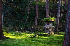 . . 個人的にお気に入りの三千院の写真 . #京都 #kyoto #紅葉 #苔 #autumnleaves #三千院 #sanzenin #retrip_kyoto #art_of_japan _  #japan_of_insta #tokycameraclub #東京カメラ部 #lovers_nippon #camera #sony #sonyα7ⅱ #カメラ #ソニー #photo #photography #sonyphotography