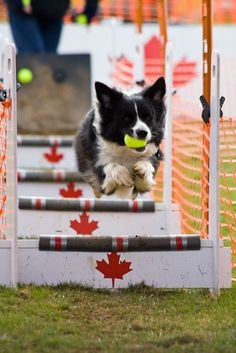 Canadian flyball