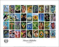 Photography project: find and photograph the alphabet in nature, architecture, or theme of choice.