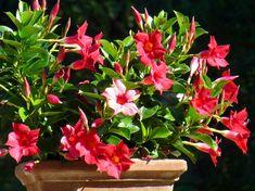 Potted Plants, Landscape, Gardening, Google, Lawn And Garden, Plants, Flowers, Pot Plants, Scenery