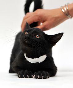 #pawpower #blackcatsrule