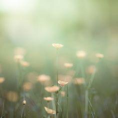 Flower Photography...Sparksofffire <3
