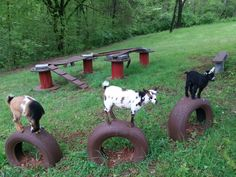 Free tires painted with deckover are my goats favorite jumping toy. Mini Goats, Cute Goats, Pygmy Goat House, Diy Goat Toys, Goat Playground, Playground Ideas, Goat Shed, Goat Barn, Boer Goats