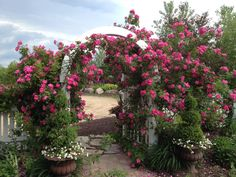 William Baffin Roses, Minnesota, Sarah's Cottage Creations Climbing Roses, Us Images, Flower Beds, Garden Landscaping, Sidewalk, Castle, Country Roads, Yard, Exterior