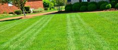 The lawn care company are the one taking care of trimming trees and plants even grass in the yard. They are making sure that the lawn is well maintained. Lawn Care Companies, Grass, Golf Courses, Sidewalk, Real Estate, Yard, Homes, Good Things, Plants