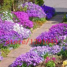 Cheap ornamental plant, Buy Quality cress seeds directly from China rock cress seeds Suppliers: Rare Flower Seeds 100 Pcs Aubrieta Seeds Superb Perennial Ground Cover Plant - Rock Cress Seeds Tropical Ornamental Plants Ground Cover Seeds, Ground Cover Plants, Garden Borders, Garden Paths, Walkway Garden, Landscaping With Rocks, Garden Landscaping, Landscaping Ideas, Beautiful Gardens