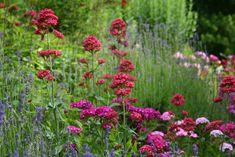 Buszując w ogrodzie: Moje roślinne odkrycia - cz. I