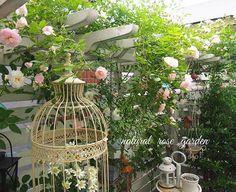 . 2016/05/10 . パーゴラから#春がすみ の誘引を少しだけ工夫して...バラが降ってくるように...枝を垂らしてみました✨✨✨ . まだ満開ではないですけど...こんな感じです✨ . . . #2016kazuローズガーデン #バラ#薔薇#つるバラ#ローズ#rose#ローズガーデン#rosegarden#小さなお庭#半日陰#板壁#パーゴラ#バラのある暮らし #バードゲージ#フランネルフラワー#ガーデン雑貨