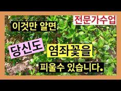 Jade, Plants, Plant, Planets