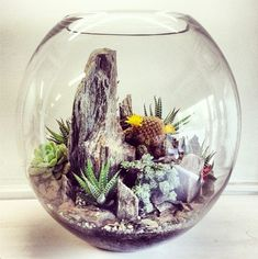 Make your miniature garden in a glass bowl: Ideas for glass terrariums – Little Piece Of Me