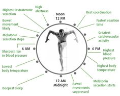 Scientists redraw the blueprint of the body's biological clock