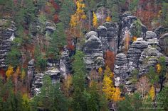 forest, national park, autumn, sachsen, saxony, saxon switzerland, germany, photo