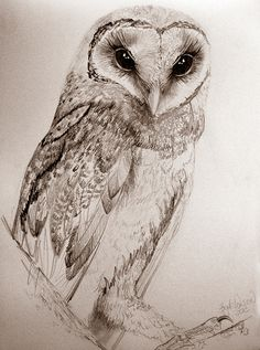 When paint dries up, there's always graphite. Life drawing right through to... owls.