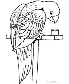 107 best parrot coloring pages images on pinterest coloring books