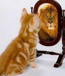 Selbstüberschätzung? Overconfidence?