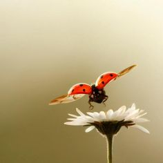rarely get a ladybug flying....