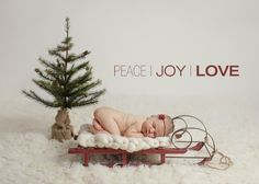 thanksgiving newborn photography | Baby D | Boston Newborn Photographer » SUSAN BARTOLINI PHOTOGRAPHY ...