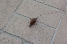 Do you need the patience of a Snail? Knowledge Is Power, Snail, Patience, Mindset, Health And Wellness, Athletic, Attitude, Health Fitness, Athlete