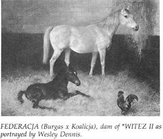 Federacja {Burgas x Koalicja} Witez II's dam - a fine horse lost to the Russians when they invaded Poland in 1939 |