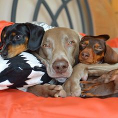 Reese, harlow and Indiana