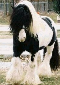 "Gypsy Horse - ""Gypsy gold does not chink & glitter. It gleams in the sun & neighs in the dark.""  ~Gladdaugh Gypsies of Galway"