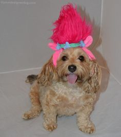 Troll / Poppy from The Trolls Movie - Halloween Costumes for Dogs - YourDesignerDog & Dressing Your Dog Up Like a Troll Only Requires 1 Costume Piece ...