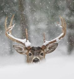 Hi there! What you doing? l Crossing this gentleman fun or scary? #winterlove #wildlife