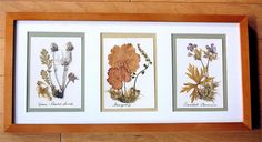 Dried native flowers as artwork - DIY Projects with dried flowers and how to dry them