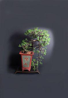 Juniper procumbens nana bonsai tree from the estate of Hirobumi Aso by LiveBonsaiTree on Etsy