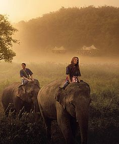 Elephant ride through Chiang Mai forest in Thailand