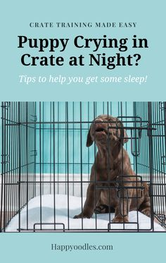 Hearing your puppy cry when they are placed in their crate at night can be very stressful. So what can you do? Here are tips to help you all get some sleep. Plus reasons why your puppy may be crying in their crate. (#puppycrying, #puppycryingincrate, #puppycryingincrateatnight) Crate Training, Training Tips, Puppy Care, Pet Care, Dog Crate Sizes, Dog Illnesses, Dog Crate Cover, Crate Ideas, Getting A Puppy