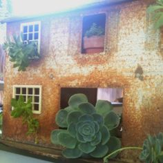 Rusted old little metal dollhouse used to house my succulent cuttings from my garden. I love my succulents!!!