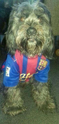 Harry is fan van Messi