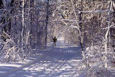 Cross-Country Skiing in Winter Wonderland, Wisconsin