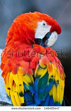 Parrot Flying Stock Photos, Images, & Pictures | Shutterstock