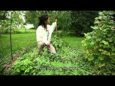 Concevoir son jardin et sa vie avec la permaculture (sous-titres français) - YouTube
