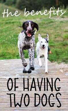 """The Benefits Of Having Two Dogs From your friends at phoenix dog in home dog training""""k9katelynn"""" see more about Scottsdale dog training at k9katelynn.com! Pinterest with over 19,800 followers! Google plus with over 133,000 views! You tube with over 400 videos and 50,000 views!! Serving the valley for 11 plus years"""