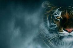 download tiger background 1920x1080
