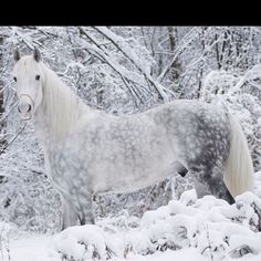 beautiful horse blends so perfectly with the snowy landscape