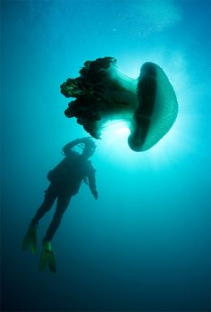 Jellyfish - Jervis Bay by Rowland Cain on Flickr.