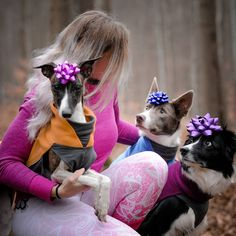 Dog Training, Boston Terrier, Dogs, Animals, Instagram, Boston Terriers, Animales, Animaux, Dog Training School