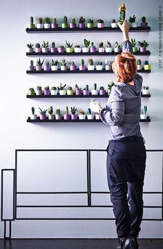 CACTACEAE Plante avec vase - IKEA