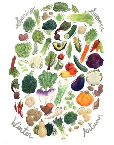 Use this print as a quick and beautiful reference as to which vegetables you should reach for each season! This reproduction of the original gouache painting is professionally printed in the USA on an 8 x 10 or 11 x 14 piece of sturdy watercolor paper. It will fit into any standard 8 x 10